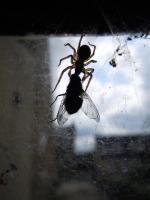 4_spiderweb-size.jpg